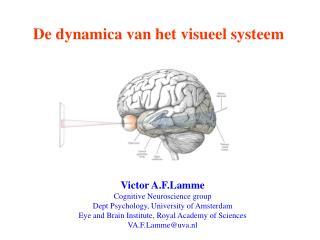 De dynamica van het visueel systeem