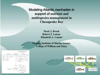 Modeling Atlantic menhaden in support of  nutrient and multispecies management  in Chesapeake Bay