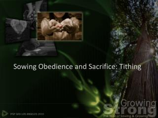 Sowing Obedience and Sacrifice: Tithing