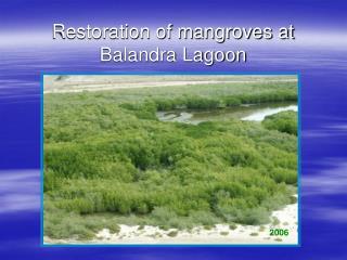 Restoration of mangroves at Balandra Lagoon