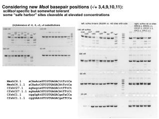 Considering new  Mso I basepair positions (-/+ 3,4,9,10,11):