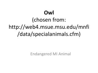 Owl (chosen from: web4.msue.msu/mnfi/data/specialanimals.cfm)