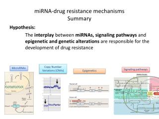 miRNA -drug resistance mechanisms  Summary