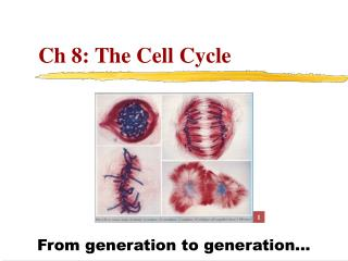 Ch 8: The Cell Cycle