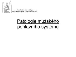 Patologie mu�sk�ho pohlavn�ho syst�mu