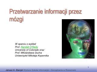 P rzetwarzanie informacji przez mózgi