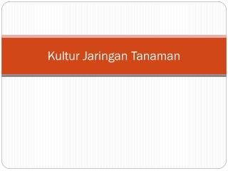 Kultur Jaringan Tanaman