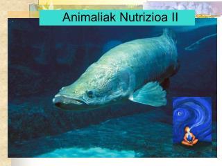 Animaliak Nutrizioa II