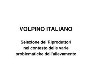 VOLPINO ITALIANO