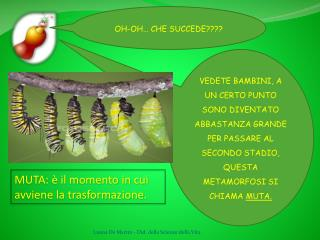 OH-OH…  CHE SUCCEDE????