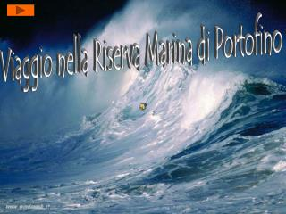 Viaggio nella Riserva Marina di Portofino
