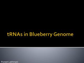 tRNAs  in Blueberry Genome