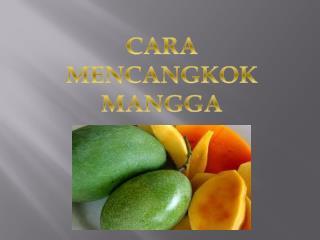 Cara Mencangkok Mangga