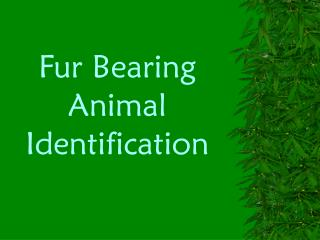 Fur Bearing Animal Identification