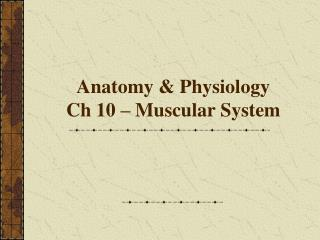 Anatomy & Physiology Ch 10 – Muscular System