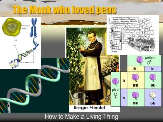 The Monk who loved peas