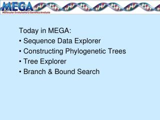 Today in MEGA:  Sequence Data Explorer  Constructing Phylogenetic Trees  Tree Explorer