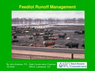 Feedlot Runoff Management