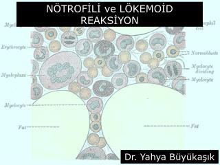 N TROFILI ve L KEMOID REAKSIYON