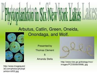 Arbutus, Catlin, Green, Oneida, Onondaga, and Wolf.
