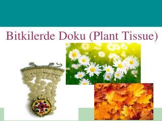 Bitkilerde Doku (Plant Tissue)