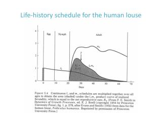 Life-history schedule for the human louse