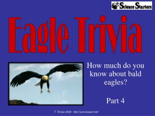How much do you  know about bald eagles   Part 4