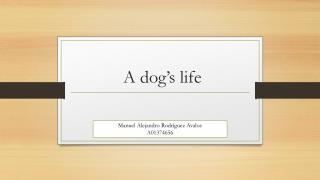A  dog�s life