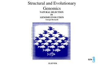 Structural and Evolutionary Genomics NATURAL SELECTION  IN  GENOME EVOLUTION Giorgio Bernardi