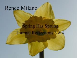 Renee Milano