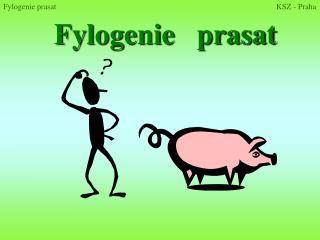 Fylogenie   prasat