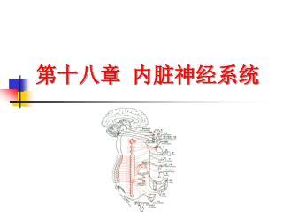 第十八章 内脏神经系统