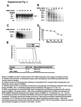 Effects of NaBH4 on PrP Sc  protein levels, PrP C  RNA hydrolysis and scrapie incubation period.
