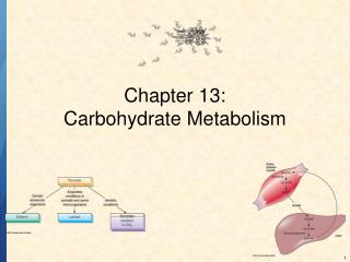 Chapter 13: Carbohydrate Metabolism