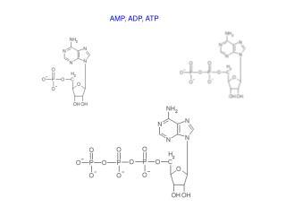 AMP, ADP, ATP
