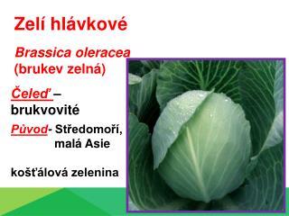 Zelí hlávkové Brassica oleracea  (brukev zelná)