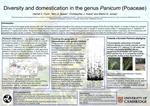 Diversity and domestication in the genus Panicum Poaceae