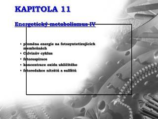 KAPITOLA 11