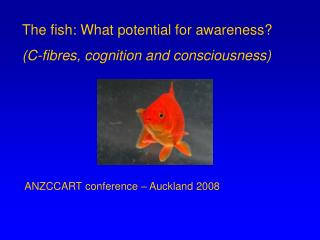 The fish: What potential for awareness?  (C-fibres, cognition and consciousness)