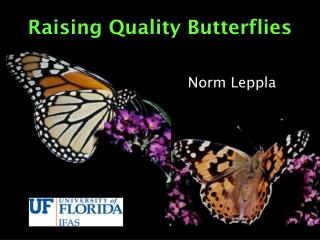 Raising Quality Butterflies