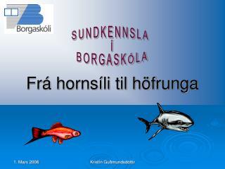 Frá hornsíli til höfrunga