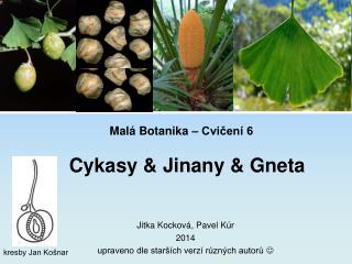 Malá Botanika – Cvičení 6