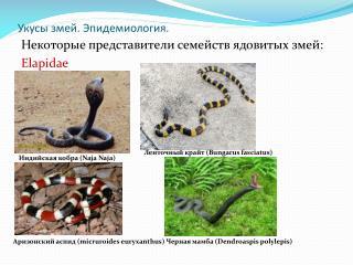 Укусы змей. Эпидемиология.