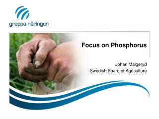 Focus on Phosphorus