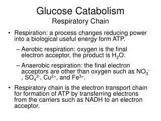 Glucose Catabolism Respiratory Chain