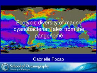Ecotypic diversity of marine cyanobacteria: Tales from the pangenome