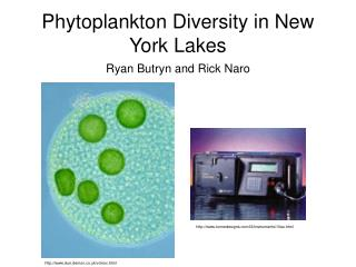 Phytoplankton Diversity in New York Lakes