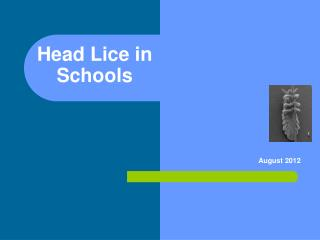 Head Lice in Schools