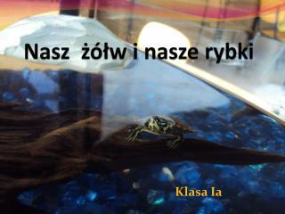 Nasz  żółw i nasze rybki