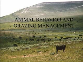 ANIMAL BEHAVIOR AND GRAZING MANAGEMENT